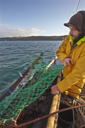 Handling the Dredge Aboard an Oyster Dredger, in Carrick Roads, Near Falmouth, Cornwall Photographic Print by Nigel Hicks