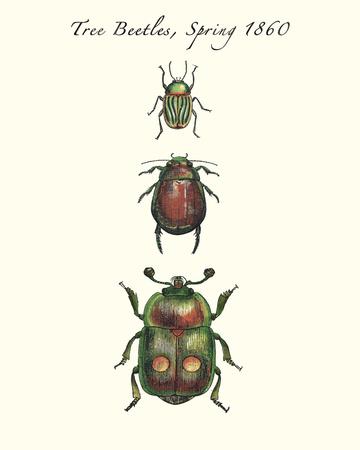 Tree Beetles Poster by Maria Mendez