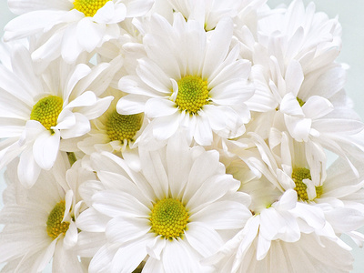 Bunch of White Daisies Posters by Gail Peck