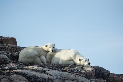 Polar Bear and Cub Resting along Hudson Bay, Nunavut, Canada Photographic Print by Paul Souders