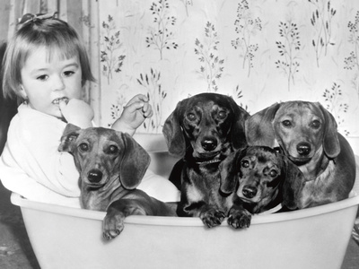 Dallas Gilby with dogs Print