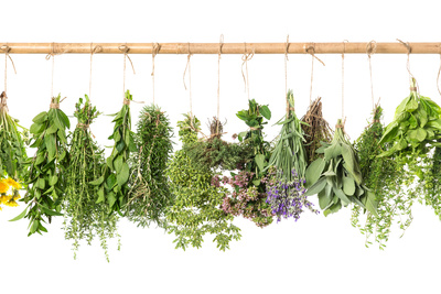 Fresh Herbs Hanging Isolated on White. Basil, Rosemary, Thyme, Mint Stampa fotografica di  LiliGraphie
