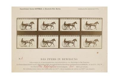 The Horse in Motion', 1878 Giclee Print by Eadweard Muybridge