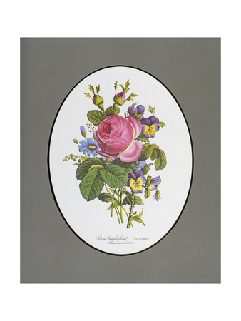 Rose Cumberland, Pansies and Cineraria Giclee Print by Pierre Narcisse Guérin