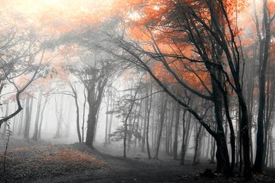 Bosques en otoño Lámina fotográfica por  PhotoINC