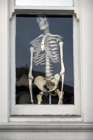 Human Skeleton in Window (Chiropractic Practice Display) Wall Decal by Henri Silberman