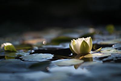 Reflection Pond Photographic Print by Ursula Abresch