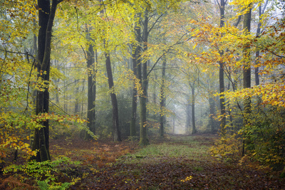 Autumn Way Photographic Print by Philippe Manguin