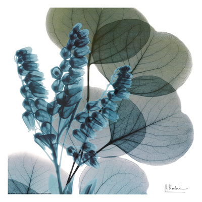 Lilly Of Eucalyptus Kunstdruck von Albert Koetsier