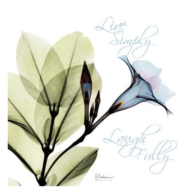 Live Mandelilla Prints by Albert Koetsier