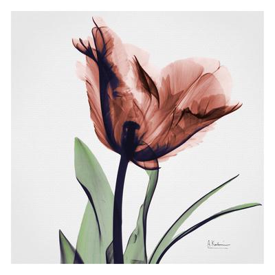 Tulip Marsala Poster by Albert Koetsier