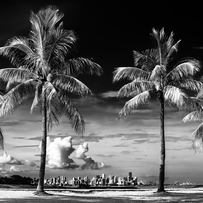 Palm Trees overlooking Downtown Miami - Florida Photographic Print by Philippe Hugonnard