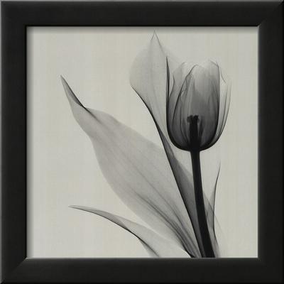 Tulip Print by Marianne Haas