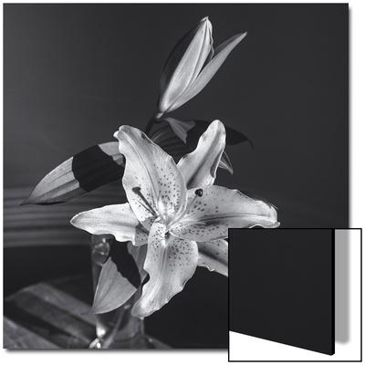 Lily Flower in Vase UMĚNÍ NA AKRYLU