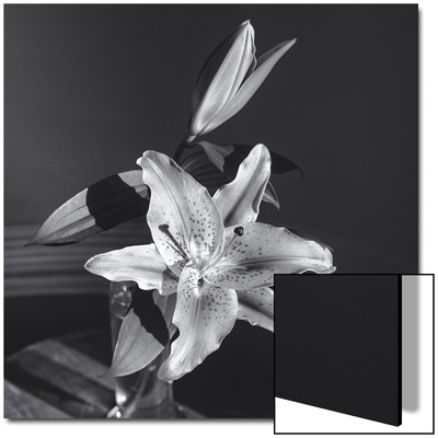 Lily Flower in Vase Poster by Henri Silberman