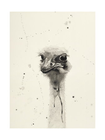 Watercolor Ostrich 2 Giclee Print by Ben Gordon