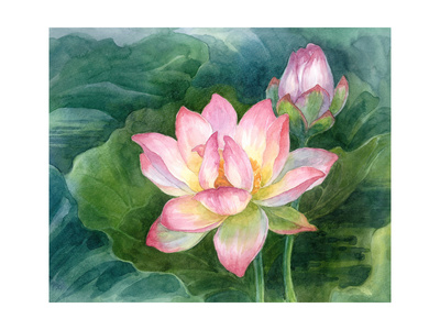 Lotus Watercolor Prints by  natalia9