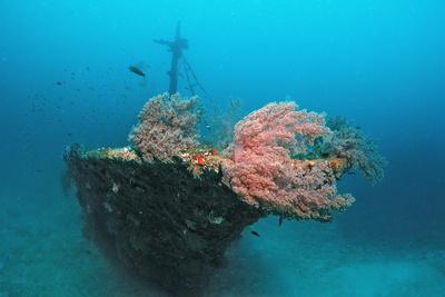 Halaveli Wreck and a Scuba Diver, Maldives. Photographic Print by Reinhard Dirscherl