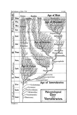 Paleontological Tree of Vertebrates, 1910 Giclee Print by Ernst Heinrich Philipp August Haeckel