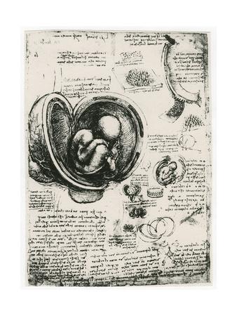 Anatomical Sketch of a Human Foetus in the Womb, C1510 Giclee Print by  Leonardo da Vinci