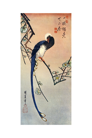 Long Tailed Blue Bird on Branch of Plum Tree in Blossom, 19th Century Lámina giclée por Ando Hiroshige