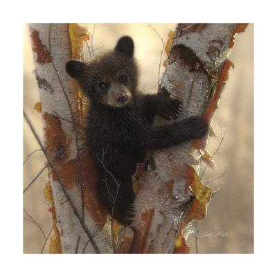 Curious Cub I Print by Collin Bogle
