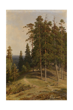 The Pine Forest, 1895 Giclee Print by Ivan Ivanovich Shishkin