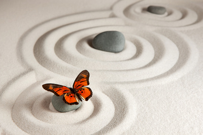 Zen Rocks with Butterfly Photographic Print by Olga Lyubkin