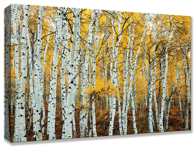Aspen Grove Yellow Stretched Canvas Print