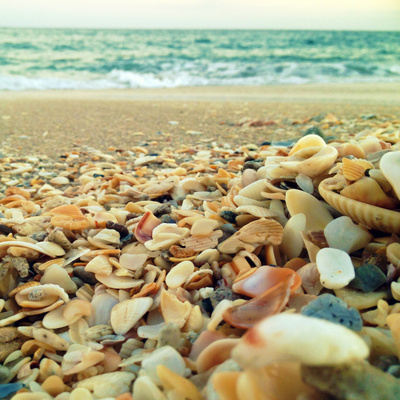 Shells Beach I Photographic Print by Lisa Hill Saghini