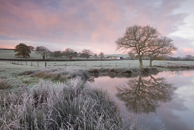 Frosty Conditions at Dawn Beside a Pond in the Countryside, Morchard Road, Devon, England. Winter Photographic Print by Adam Burton