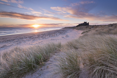 Sunrise over Bamburgh Beach and Castle from the Sand Dunes, Northumberland, England. Spring (March) Fotografisk tryk af Adam Burton