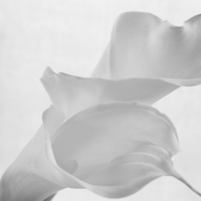 Black and White Calla Study Photographic Print by Anna Miller