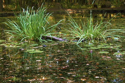 Pond Photographic Print by Anna Miller