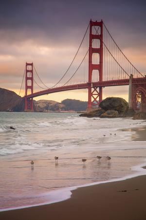 Golden Gate Bridge and Shore Birds, San Francisco Photographic Print