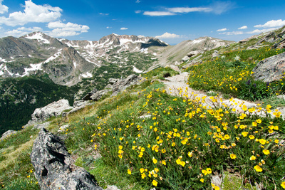Hiking Trail through Flowers of Colorado Mountains Photographic Print by  deberarr