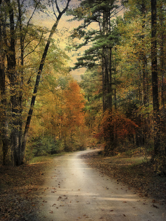 Autumn Forest 4 Fotografie-Druck von Jai Johnson