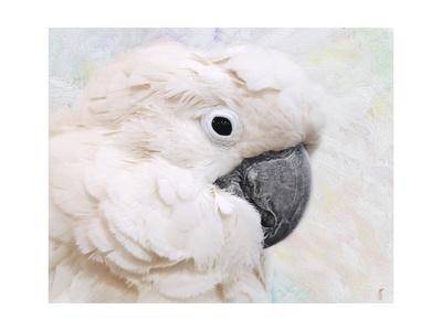 Umbrella Cockatoo Portrait Giclee Print by Jai Johnson