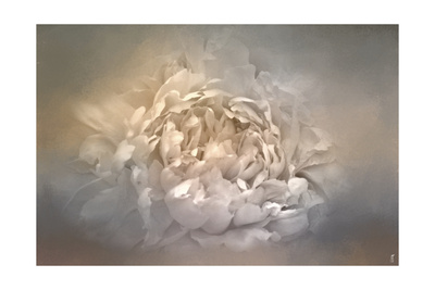 Blushing Silver and Gold Peony Giclee Print by Jai Johnson