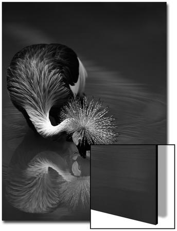 The Reflection Prints by  C.S.Tjandra