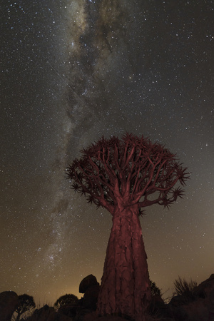 Quiver Tree, Namibia 2 Lámina fotográfica por Art Wolfe