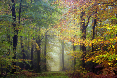 Brocéliande colored forest Photographic Print by Philippe Manguin