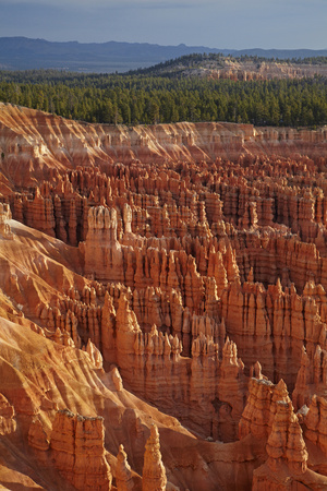 Utah, Bryce Canyon National Park, Hoodoos in Bryce Amphitheater Photographic Print by David Wall