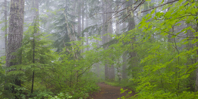 Washington, Mount Rainier National Park. Trail in Forest Photographic Print by Jaynes Gallery