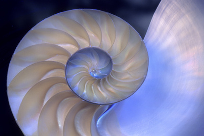 Interior of Pearly Nautilus Shell Native to Seas of Indo Pacific Photographic Print by Thomas Wiewandt