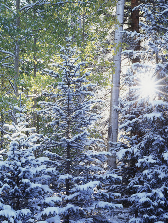 Colorado, San Juan Mountains, First Snow in the Forest Photographic Print by Christopher Talbot Frank