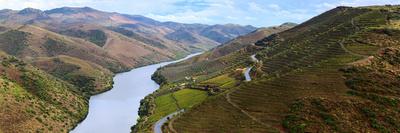 Vineyards Along Douro River, Near Coa Valley Photographic Print by Babak Tafreshi