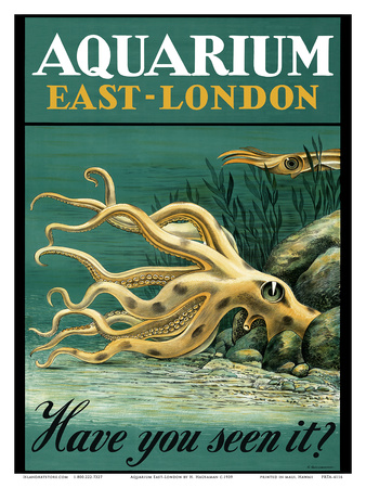East-London Aquarium - South Africa - Have you seen it - Octopus Posters by H. Haüsaman