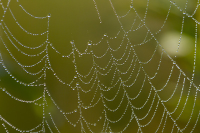 Web of an Orb-Weaving Spider, Perhaps Argiope Sp., in Dew, North Guilford, Connecticut, USA Photographic Print by Lynn M. Stone