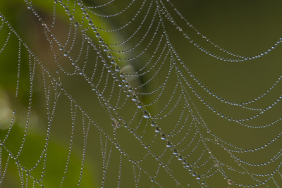 Web of an Orb-Weaving Spider, Probably Argiope Sp., in Dew, North Guilford, Connecticut, USA Photographic Print by Lynn M. Stone